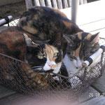 Dolly und Mizzi August 2006 (Mizzis letzter Sommer)