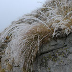 Tiefe Wolken am Pizzo Ruscada erzeugten Reif an den Gräsern