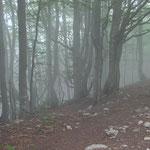 Nebelwald an den Denti della Vecchia