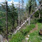 Waldbruch beim Abstieg nach Baulmes