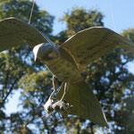 faucon tenant un rongeur 50 cm