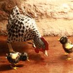 poule et poussins 22 et 7 cm