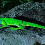 lézard vert peint 22cm