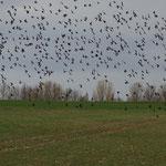 Auch die Vögel beenden ihre Sommersaison.
