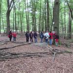 Viel Platz im Wald