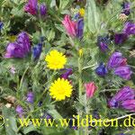 Blumenwiese - Nahrungspflanzen für Wildbienen
