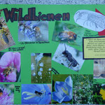 Präsentation: Plakat 1: Wildbienen - Ihr Nutzen