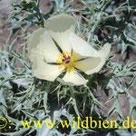Un flor cerca Punta Blanca