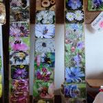 Wildbienen bescheren und erhalten uns die bunte Naturvielfalt!