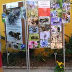 Die große Artenvielfalt lässt sich nur auszugsweise darstellen. Es gibt etwa 550 unterschiedliche Arten in Deutschland. Im Raum Dortmund dürften es etwa 100 Arten sein.