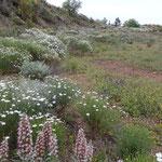 Blumenwiese im Mai