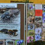 ... Artenvielfalt in Form von Postern