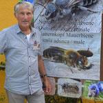 Die Natternkopf Mauerbiene wurden von mir als Blickfang präsentiert