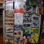 Wildbienen & Nahrungspflanzen