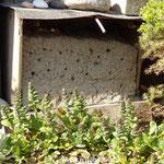 Lehmwand, in diesem Jahr zum ersten Mal das Quartier von Pelzbienen mit 3 belegten Neströhren