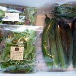 7月にはエンドウやインゲンなどの豆類が収穫出来ます。キュウリやサラダセットを加えて、地方発送も承ります。