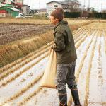 稲刈り後に米糠を田んぼへ戻します。