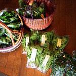 4月、春一番の野菜の様子です。雪の下で育った野菜はとっても甘くておいしいですよ。