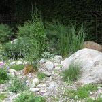 Ruderalfläche mit Findlingen, üppig bepflanzt und doch pflegeleicht
