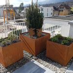 Bepflanzt, jetzt noch die Bewässerung installieren, dann können die Pflanzen wachsen und gedeihen.