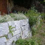 Trockensteinmauer mit vielen Ritzen und Spalten - Eidechsen lieben es