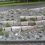 Ruderalfläche mit Jurastein-Trockenmauer, gerade fertiggestellt und bepflanzt