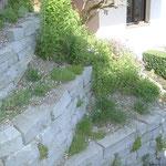 Sandsteintrockenmauer mit einheimischer Bepflanzung