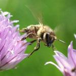 Das freut auch die Bienen..