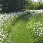Blumenwiese mit gemähtem Weg