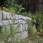 Trockensteinmauer mit Ritzen, bepflanzt mit einheimischen Stauden.