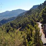 Une route en milieu de montagne et d'arbres