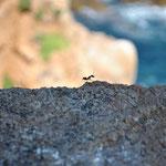 Une fourmi espagnole