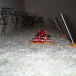 PB 600w Polar beim präparieren