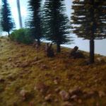Zwei Hasen im Wald