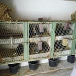 Kaninchen werden auch gehalten.