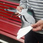 1ter Preisflieger DV-0530-13-0224 Vogel