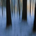Wald-Wischer