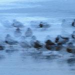 Enten-Wischer