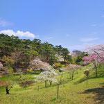 桜 君ヶ丘公園