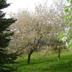 derrière le chalet au printemps