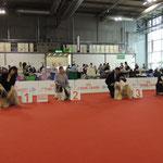 """Sieger der Veteranen Klasse, Chiwa gewinnt den Titel """"Veteranen Weltsieger 2015"""""""