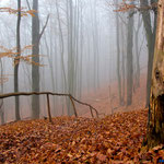 Jena, Nebel, Kernberge, Horizontale