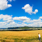 reifes Getreidefeld bei Maua in Jena
