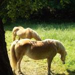 Pferde am Rande des Weges