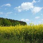 Kontraste: Raps - Wald - Himmel