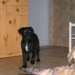 Rieka, Mischling, 4 Monate