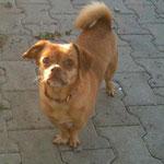 Polly, Mischling, 2 Jahre