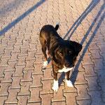 Oreo, Mischling. 3,5 Jahre