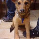 Trixie, Mischling, 4 Monate