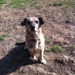 Lulu, Dackelmix, ca. 5 Jahre